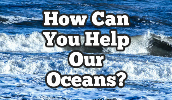 How you can help our oceans?