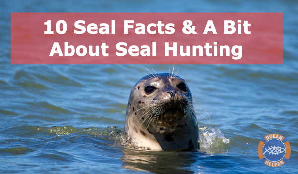 10 Interesting Facts About Seals