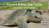 Kemp's Ridley Turtle - Sea Turtle Info Sheets #1