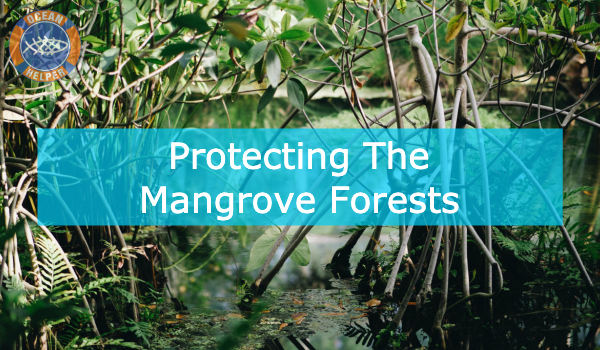 Help Protect Mangrove Forests