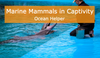 How does captivity affect marine mammals?
