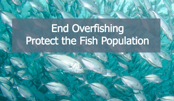 Overfishing - It's Time For A Change