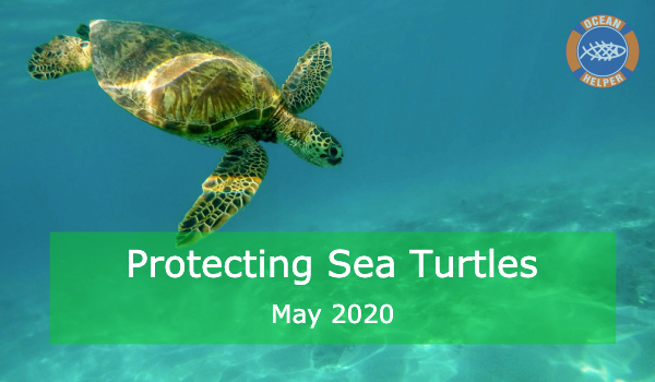 Protecting Sea Turtles After Lockdown