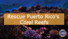 Emergency Action is Needed to Save Puerto Rico's Reefs