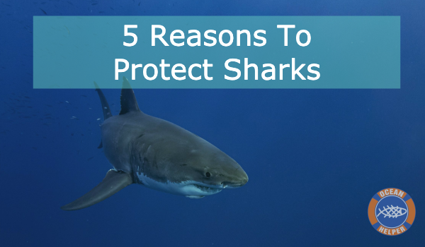 Overfishing Is Currently The Biggest Threat Facing Sharks