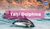 The Heartbreaking Story of Taiji's Dolphins