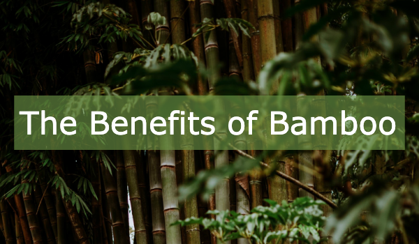 The Benefits of Bamboo