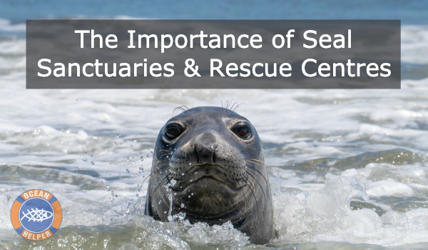 Seals are the Dogs of the Sea!