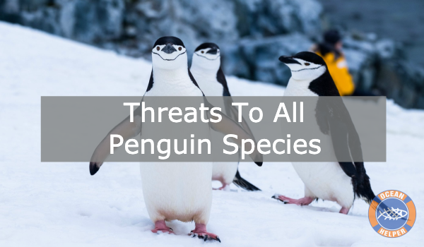 Threats To Penguins