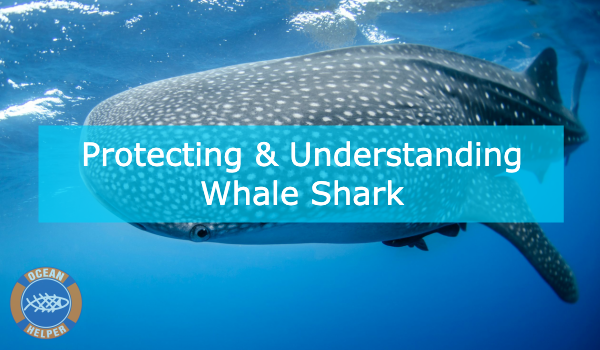 Learn About Whale Sharks