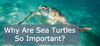 Why Are Sea Turtles Important?