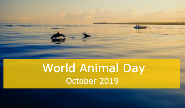 World Animal Day - Vaquita