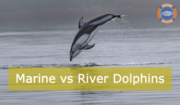What about River/ Freshwater Dolphins?