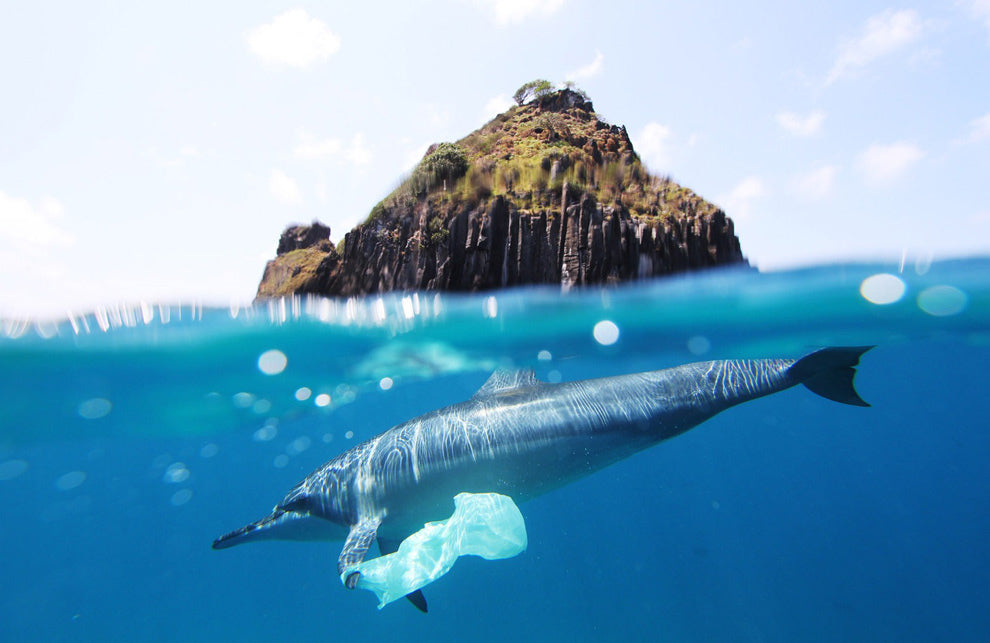 How Plastic Kills the Oceans