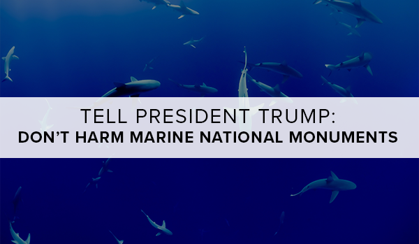 Tell President Trump: Don't Harm Marine National Monuments