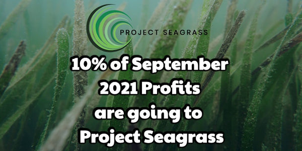Supporting Project Seagrass