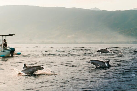 Dolphins By The Coast