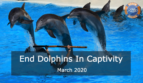 End Dolphins In Captivity
