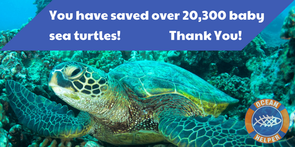 Over 20,300 baby sea turtles