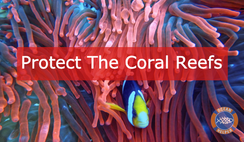 Protect The Coral Reefs