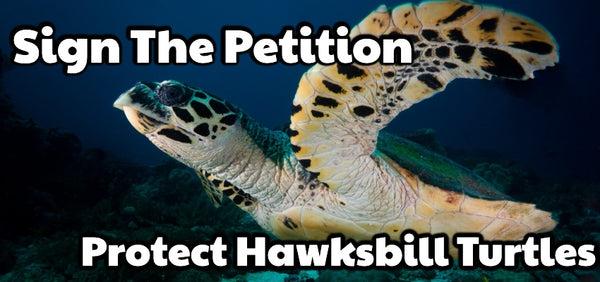 Hawksbill Sea Turtle Sign The Petition