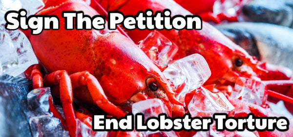 Sign The Petition End The Torture of Lobsters