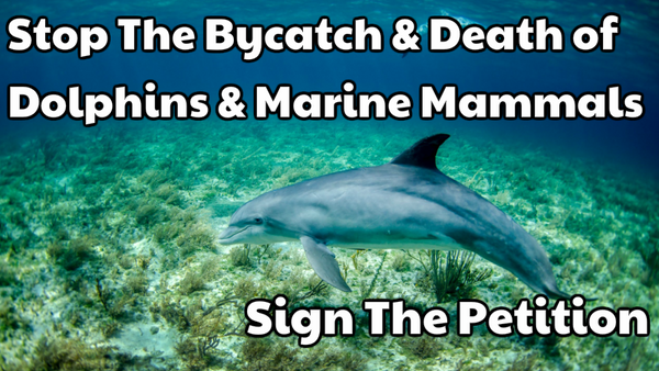 Sign the Petition Supertrawlers vs Dolphins