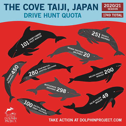 The Dolphin Project - Dolphin Hunt 2020/2021