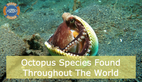 Octopus Day 2020