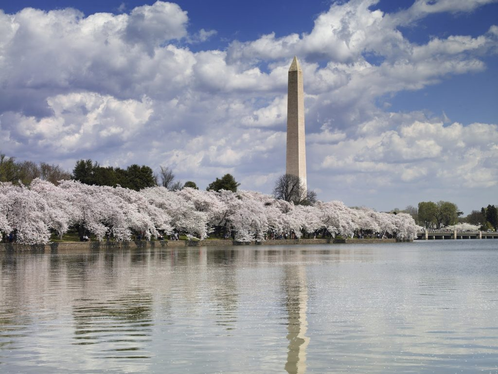 Washington DC Cherry Blossoms - march travel destination