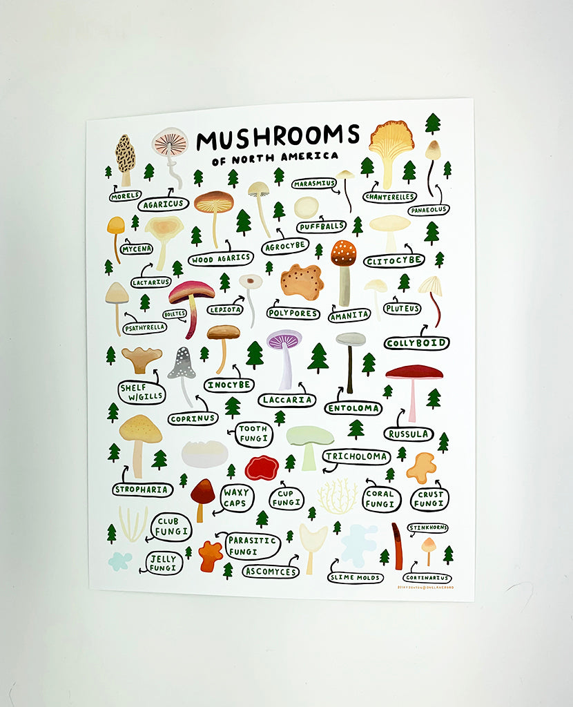 Mushrooms of North America Print