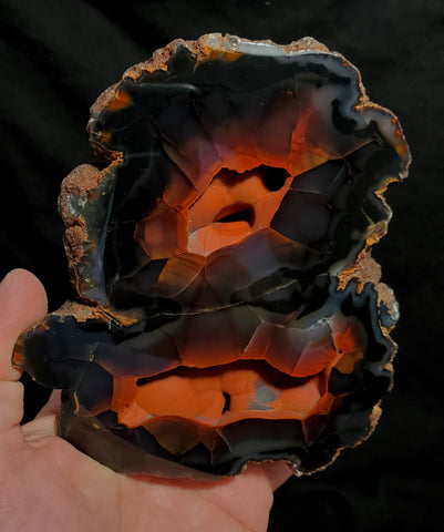 "RED FOX AGATE #80 ""DOUBLE FOX"""