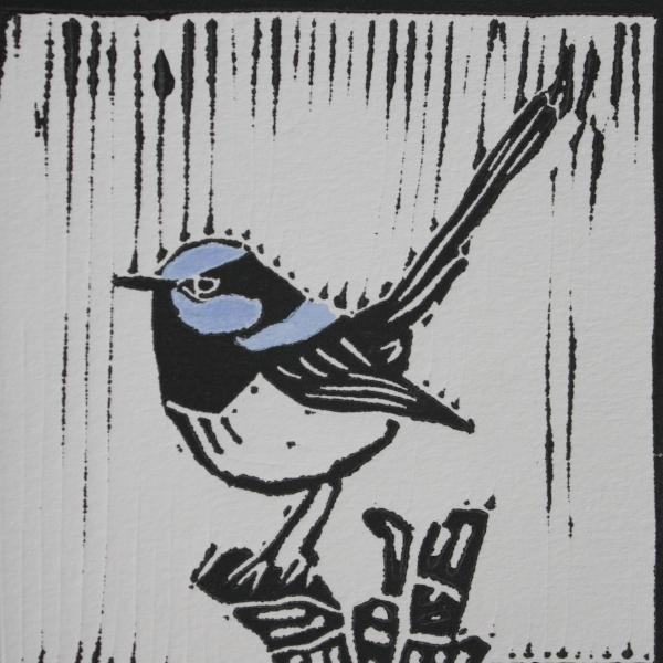 Blue Wren 1 (Black Ink on White Paper - Hand Coloured)