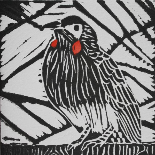 Red Wattle Bird (Black Ink on White Paper - Hand Coloured)