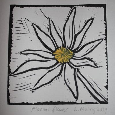 Flannel flower (Black Ink on White Paper - Hand Coloured)