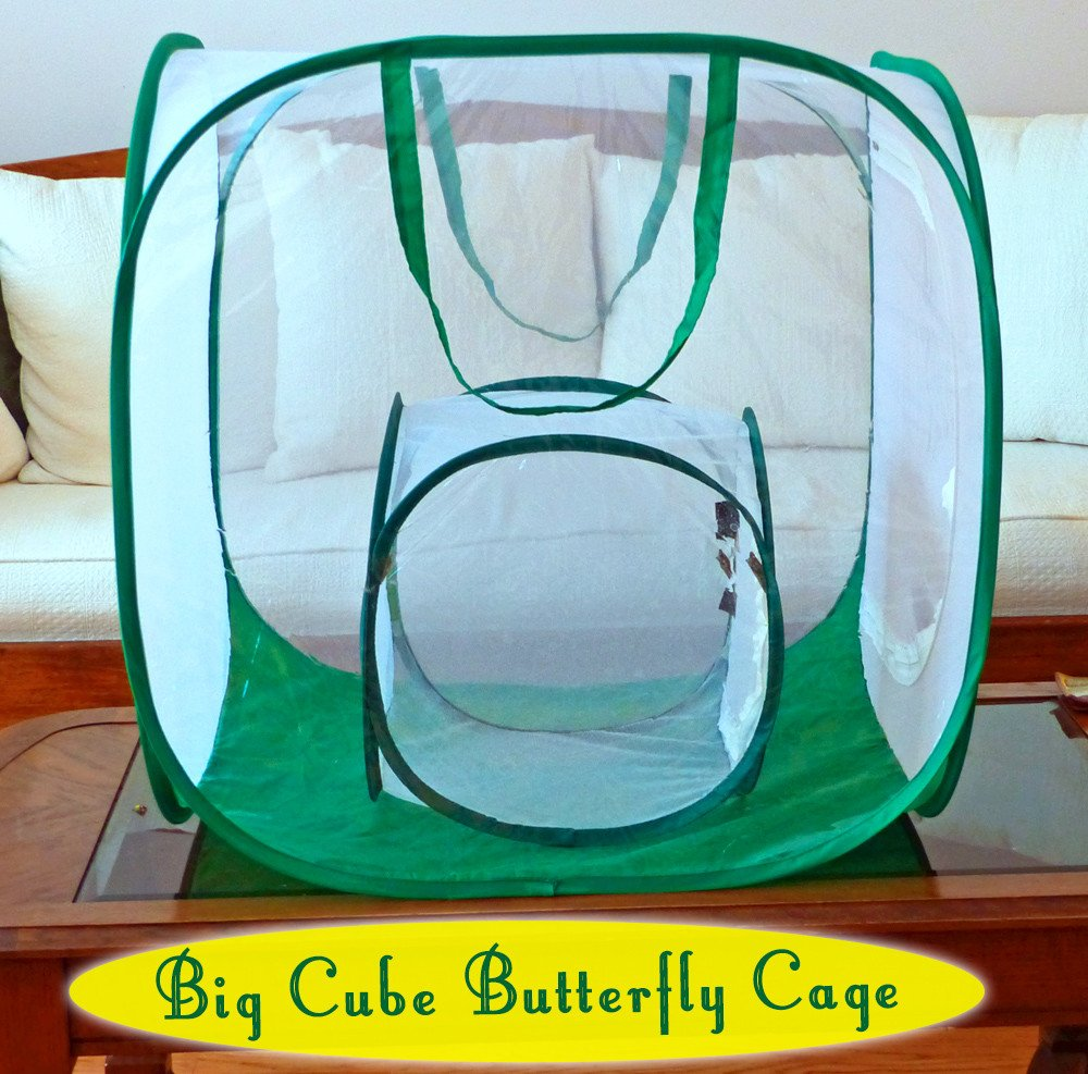 monarch butterfly shop raising butterflies cages and butterfly gifts. Black Bedroom Furniture Sets. Home Design Ideas