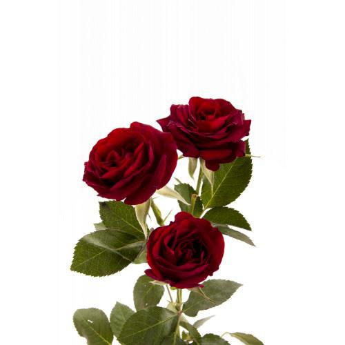 Spray Rose - Deep Red