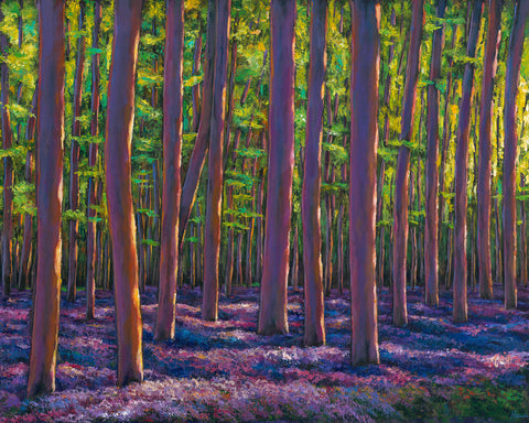 Bluebells And Forest - Johnathan Harris Fine Art