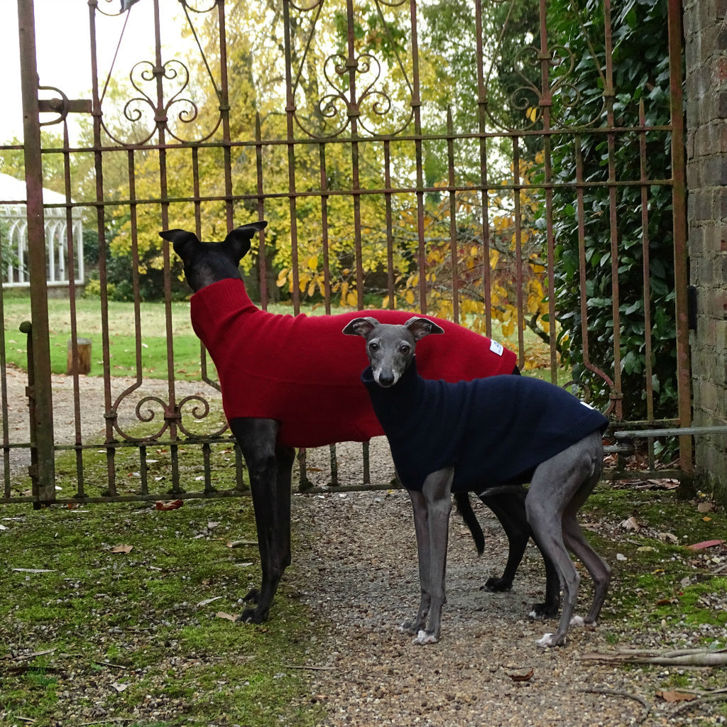 Cashmere Whippet & Iggy sweaters