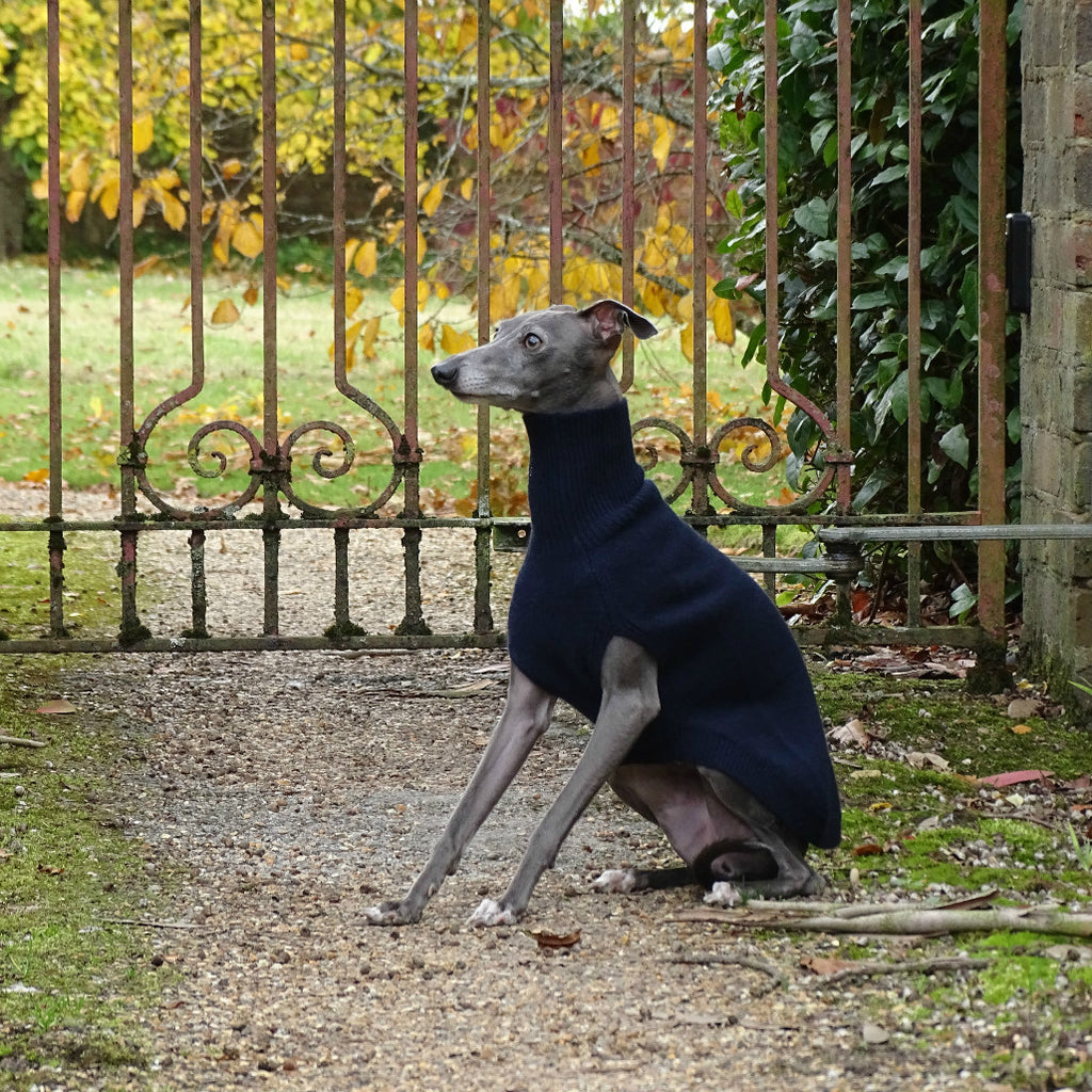 Midnight blue cashmere sweater for Italian Greyhound