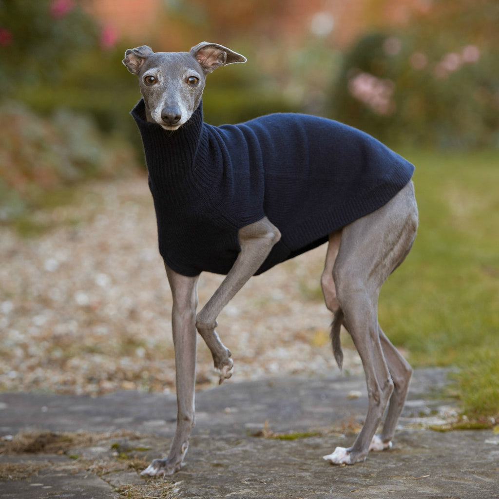 Cashmere Sighthound Sweater