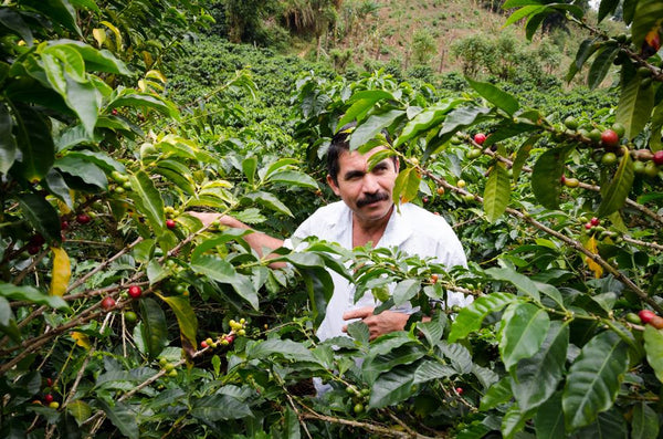 Limited Edition Honduras Green Coffee Beans