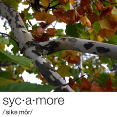 Sycamore Branch