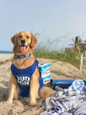 Bud_Light_Pet_Small_Collar