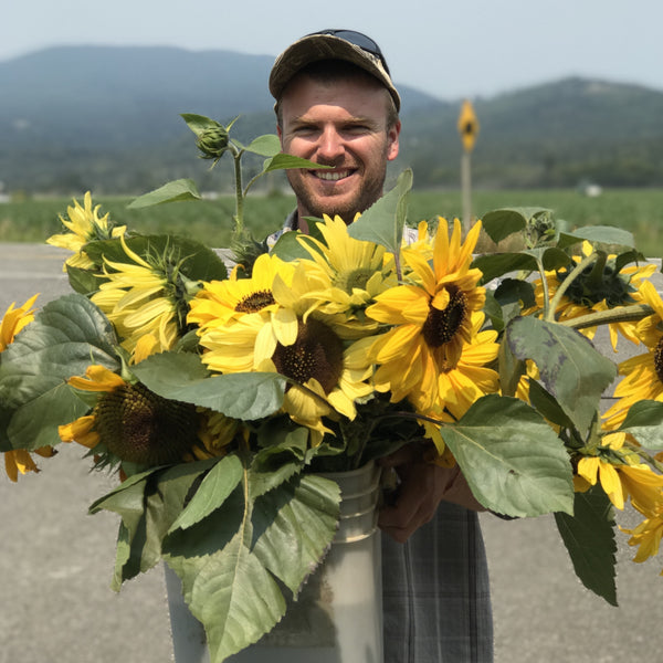 David & the Sunflowers