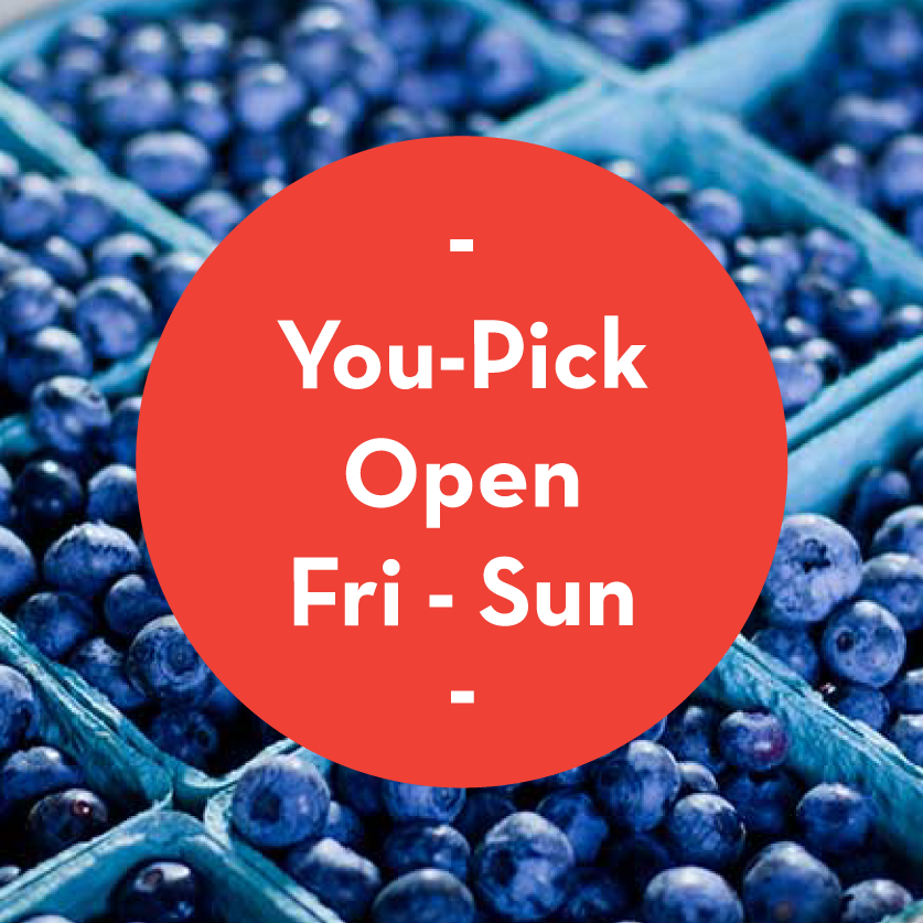 Harvest News: You-Pick is Open!