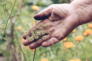 Why I left a successful clinical practice to become a herbalist