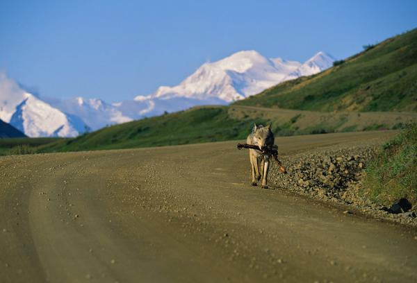 T.R. Diamond - Denali Mountains, Alaska