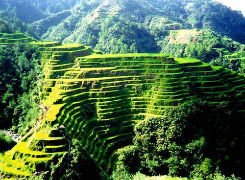 T.R. Diamond - Banaue Rice Terraces, Philippines