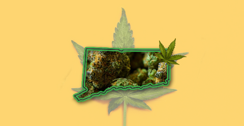 bwg weed design Connecticut